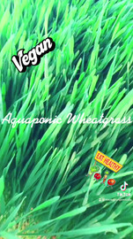 Wheatgrass.mp4