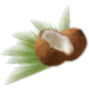 coconut-979858.png