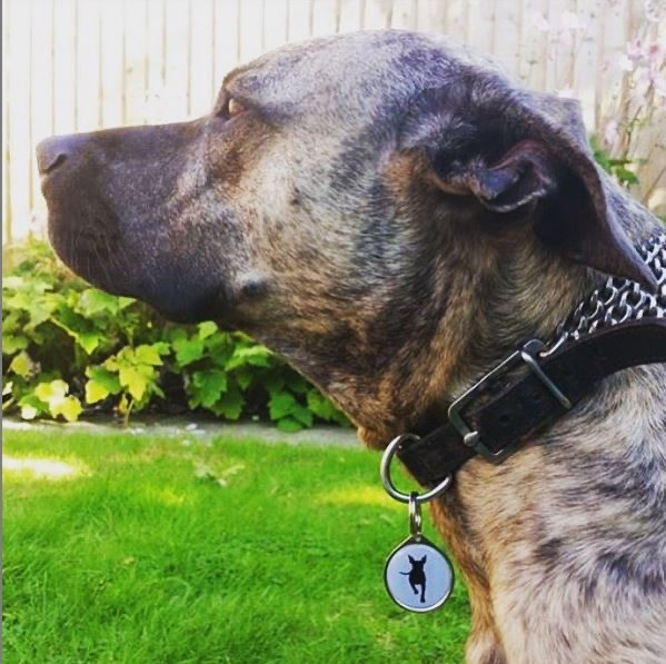 Custom pet business logo dog tag by paw