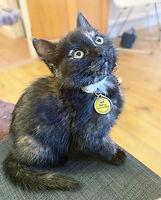 SS22 CAT FACE CAT MODEL.jpeg