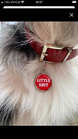 Funny dog tags UK by Pawesome Pet Tags