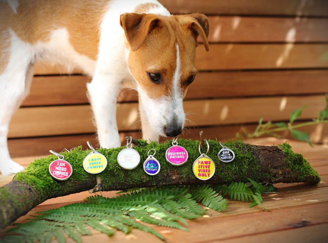Pawesome pet tags range of funny pet tags UK