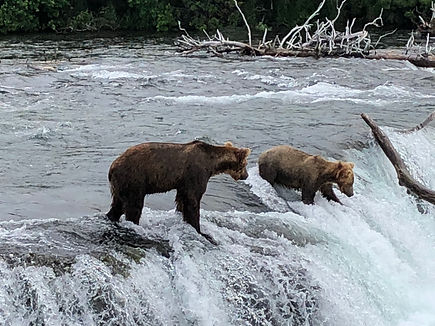 The Traveling Ranger: All Bears, All the Time