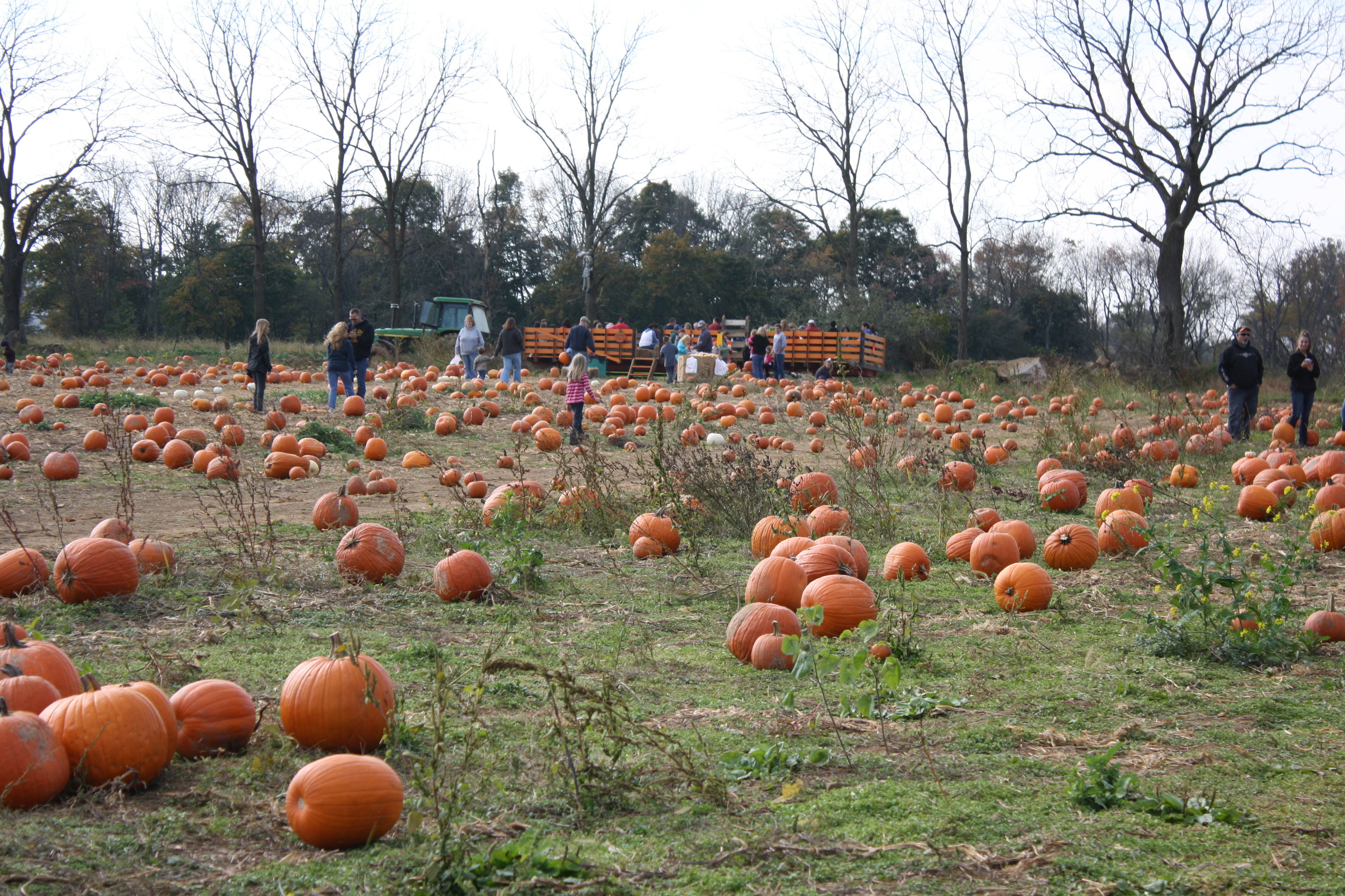 Pick Pumpkins Right Off the Vine