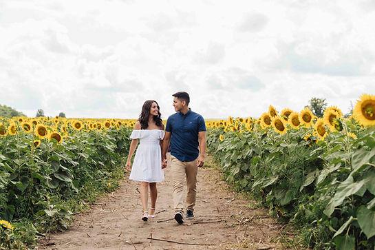 sunflower-farm-photos_3.jpg