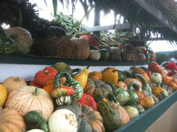Fall Decorations for Sale