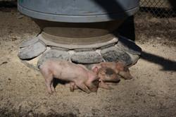 Baby animals to vist