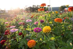 Ort_Flowers-7034.jpg