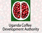 Uganda Coffee Development Authority