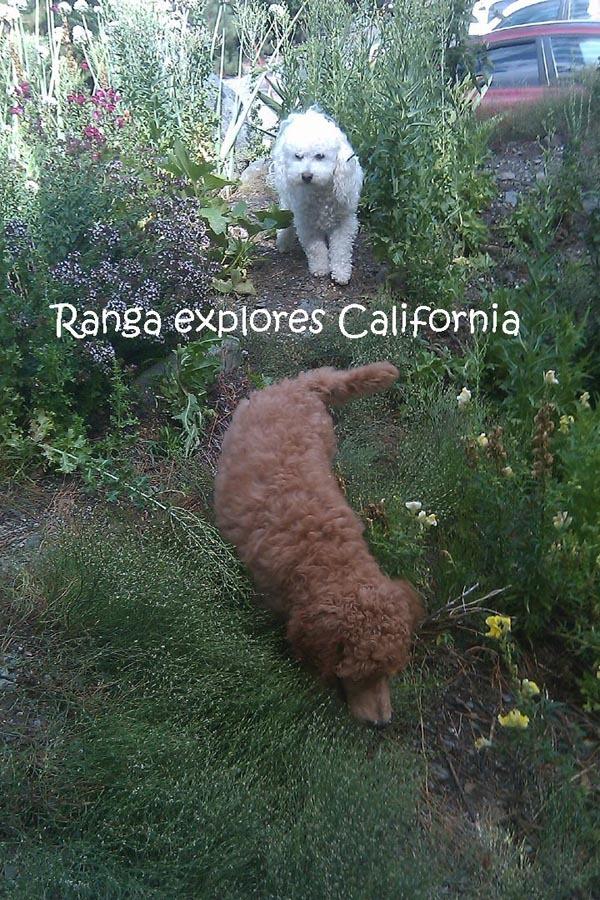 Ranga explores.jpg