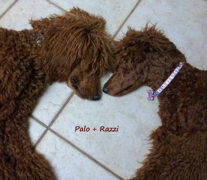 Palo n Razzi heart 072013.jpg
