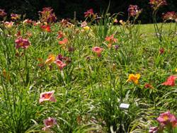 garden 3 June 16.JPG