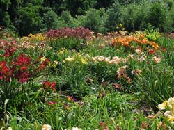 garden 4 June 16.JPG