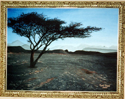 Terebinth Tree in the Sinai