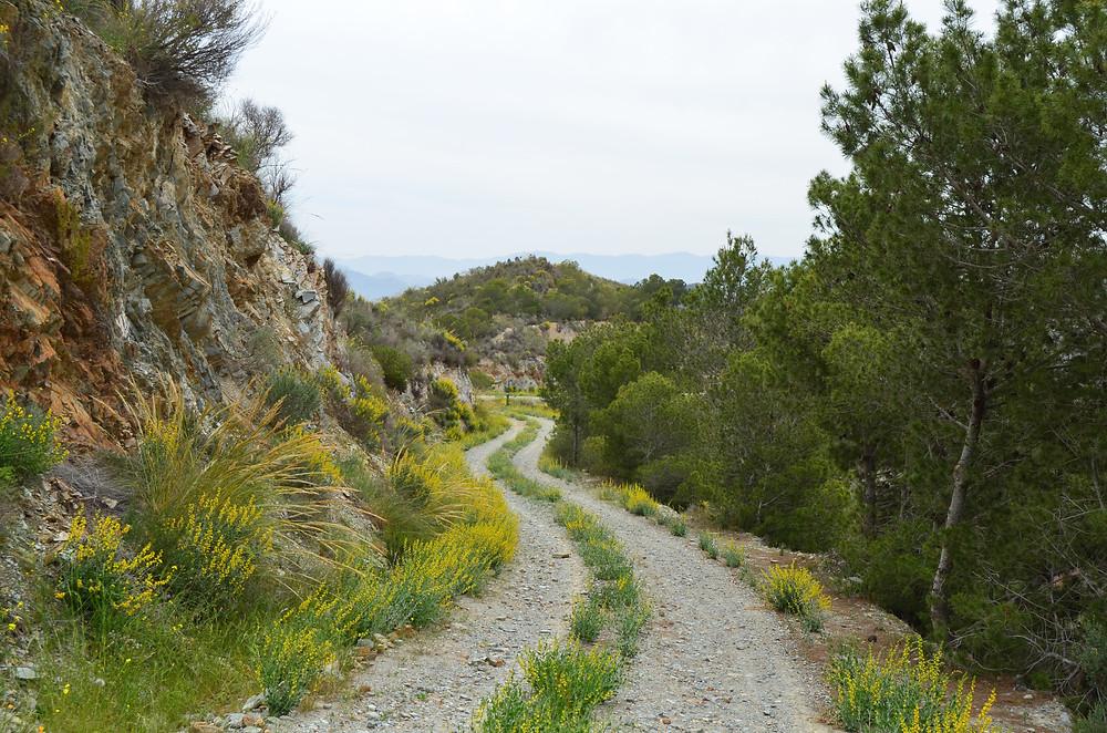 Influencia de zonas verdes en la Región de Murcia en la Salud Mental.