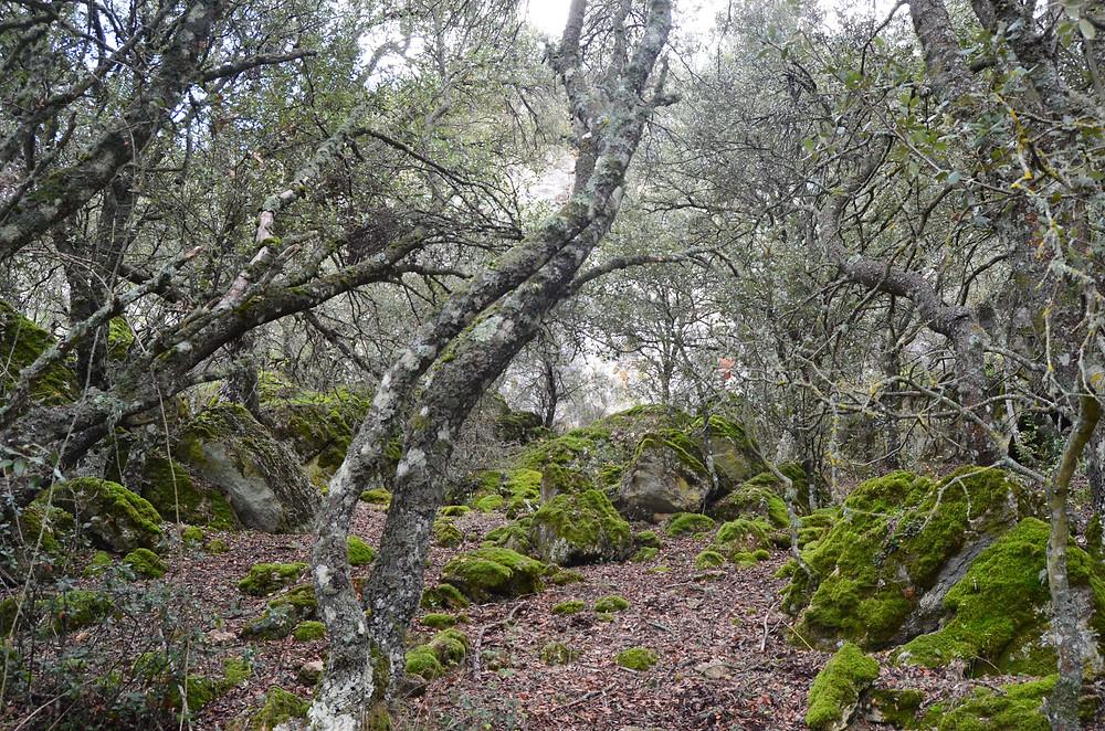 El carrascal de Bajil, entre las cuevas y el Rincón de los Huertos (Moratalla). Fotografía de Jose María Caballero.
