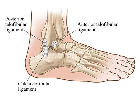 Ankle anatomy for ankle sprain clinical physio st ives