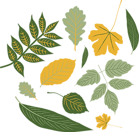 Developed Leaves@300x.png