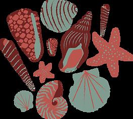 Developed Shells@300x.png