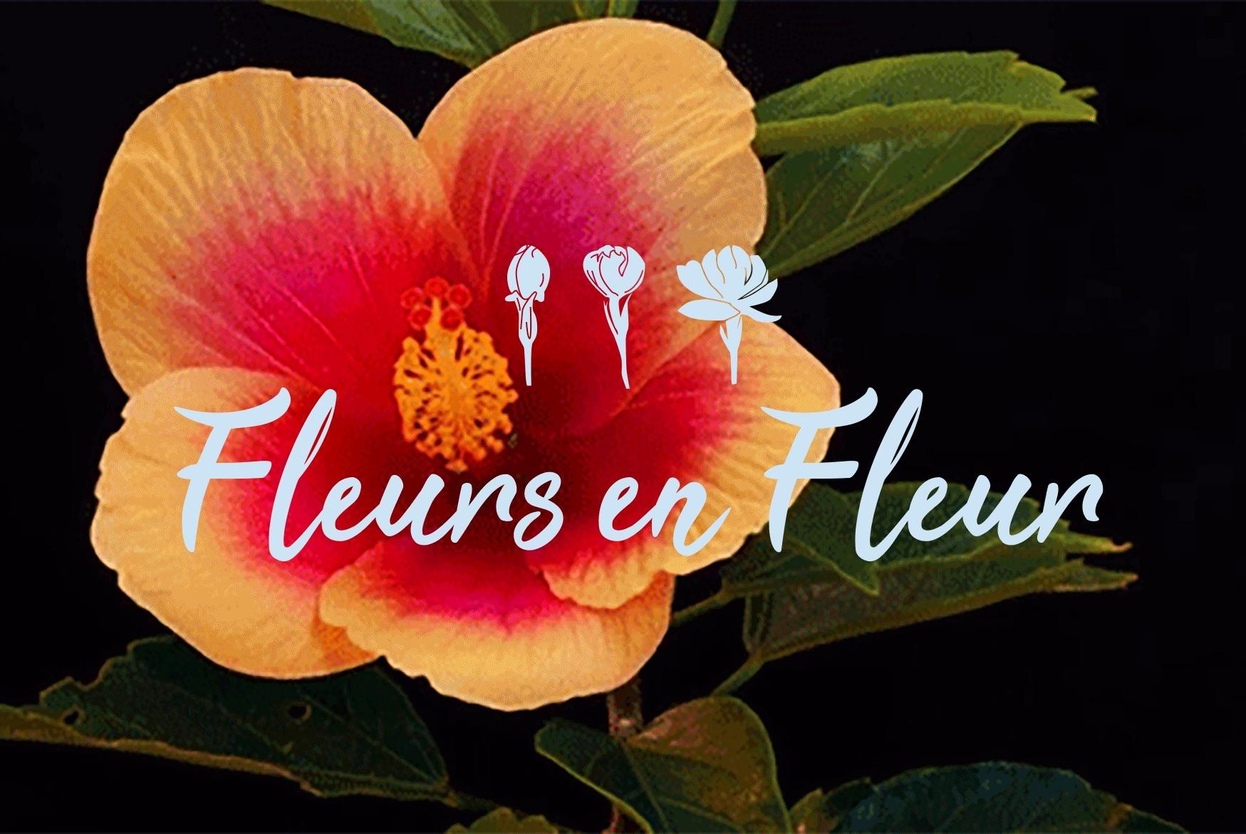Fleurs en Fleur