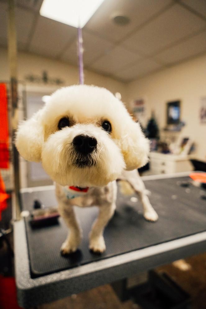 dog-grooming-36jpg