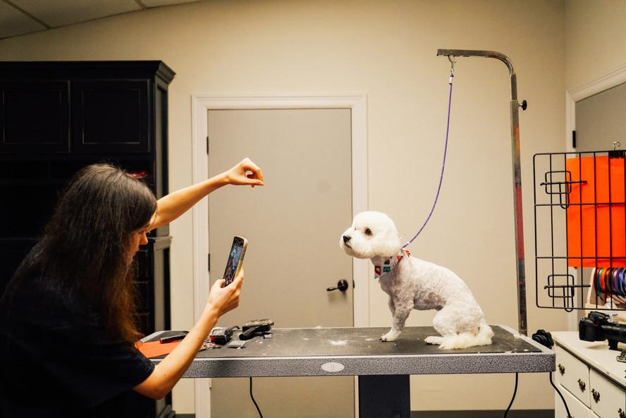dog-grooming-42jpg