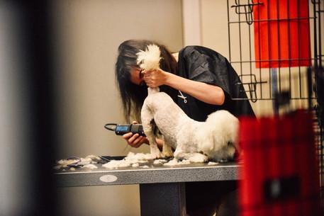 dog-grooming-16jpg