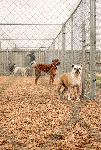 dog-outside-104jpg