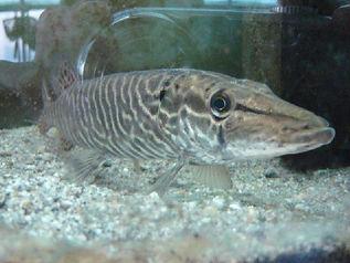 allevamento-sperimentale-di-specie-ittic