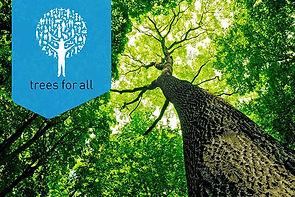plant-het-voort-trees-for-all.jpg