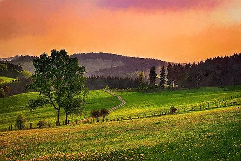 """Evening Pasture"" Fine Art Print"