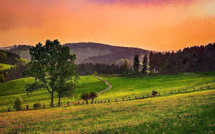 Evening Pasture