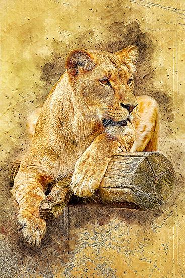 """Lioness at Rest"" Fine Art Print - 12"" x 16"""