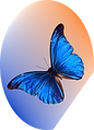 butterfly_logo_medium.png