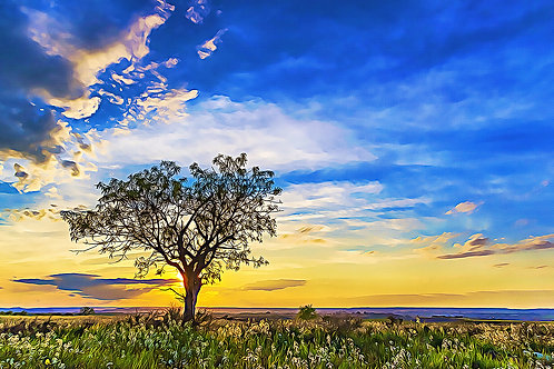 """Solitary Tree at Sundown"" Fine Art Print"