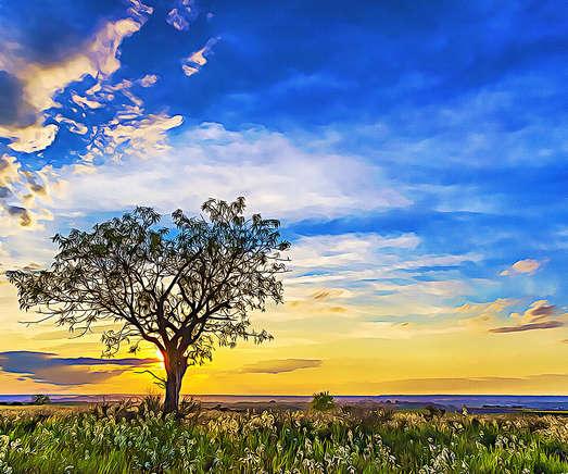 Solitary Tree at Sundown