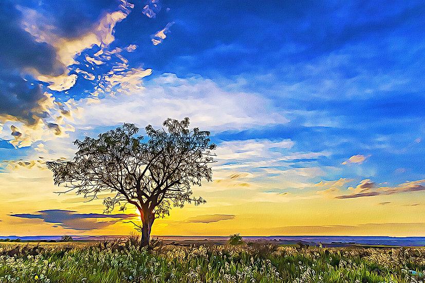 """Solitary Tree at Sundown"" Fine Art Print - 12"" x 16"""