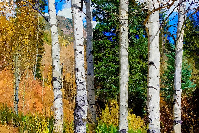 """Hillside Aspen Grove"" Fine Art Print - 12"" x 16"""