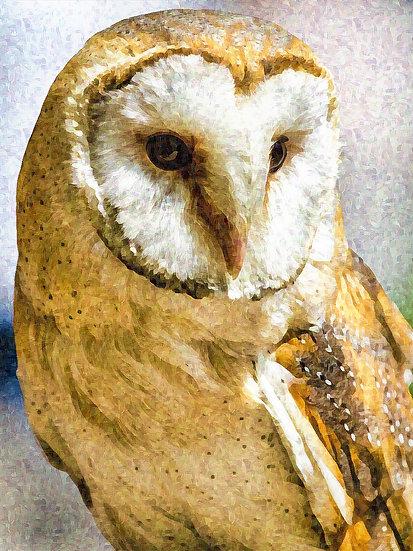 """Barn Owl"" Fine Art Print - 12"" x 16"""