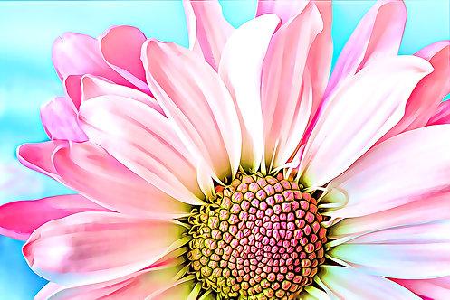 """Pink Dahlia"" Fine Art Print"