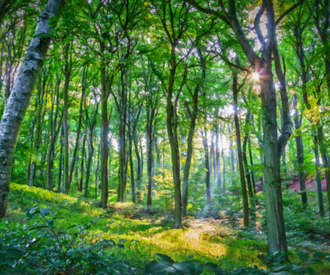 emerald forest.jpg