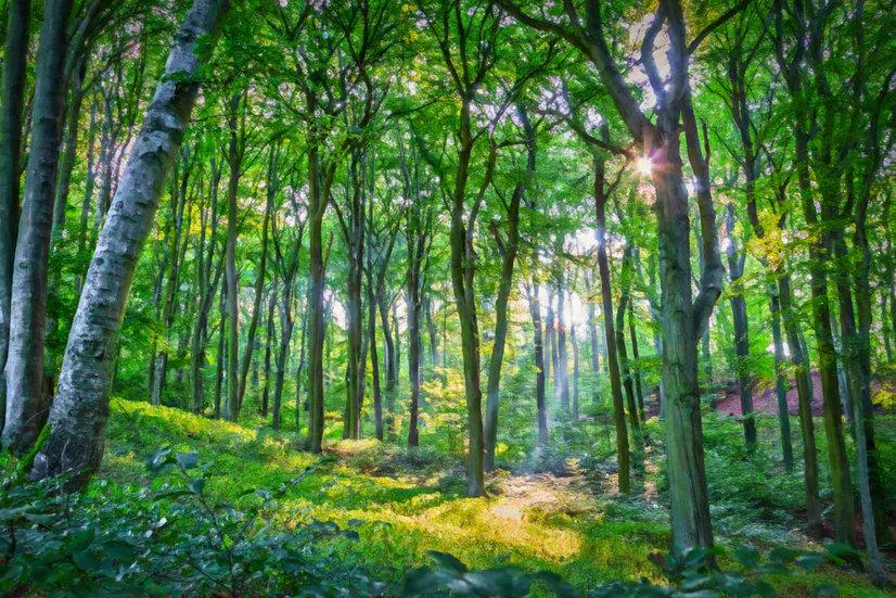 """Emerald Forest"" Fine Art Print - 12"" x 16"""