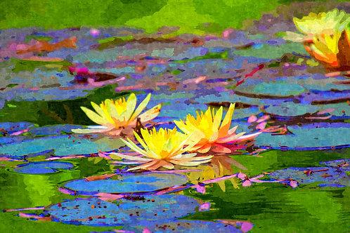 """Yellow Water Lilies"" Fine Art Print"