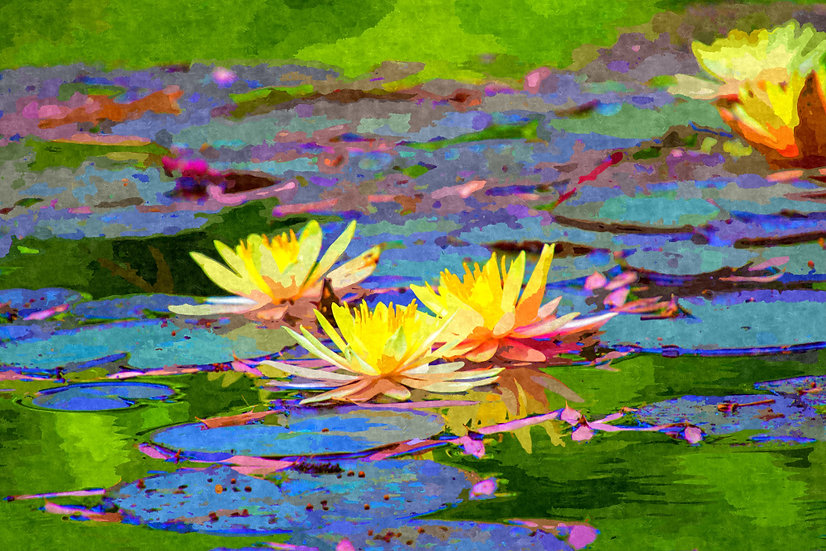 """Yellow Water Lilies"" Fine Art Print - 12"" x 16"""
