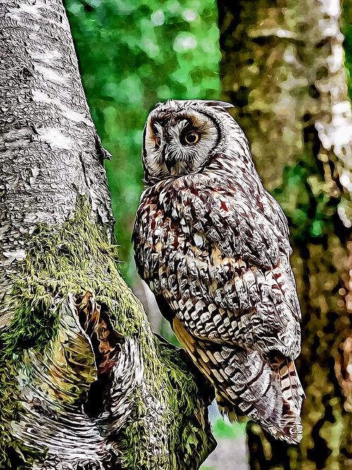 """""""Long-eared Owl""""  Fine Art Print"""