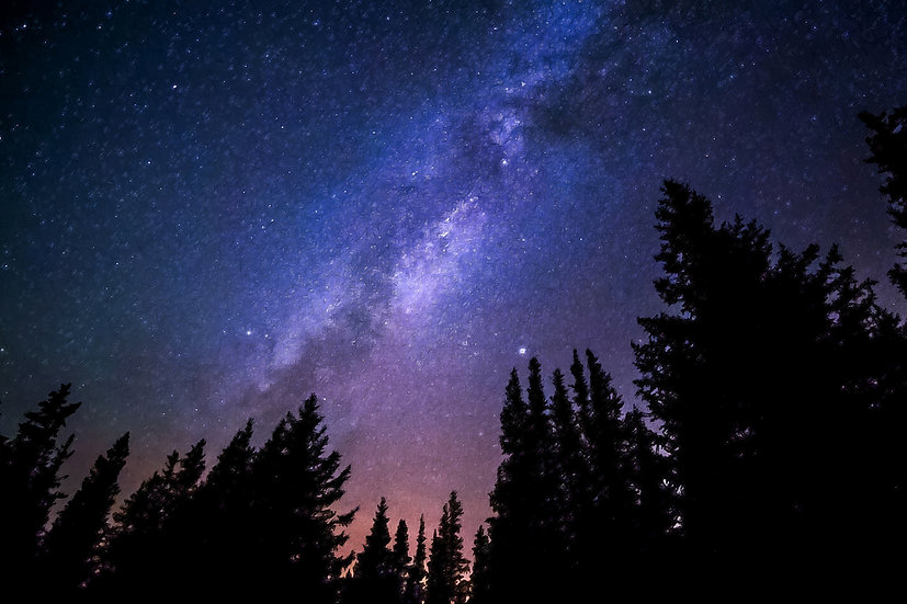 """Conifers Reaching to Milky Way"" Fine Art Print - 12"" x 16"""