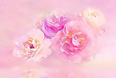"""""""Pink Roses in the Clouds"""" Fine Art Print"""