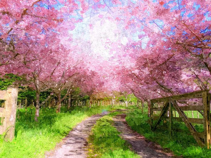 """""""Cherry Blossom Lane"""" Fine Art Print - 12"""" x 16"""""""
