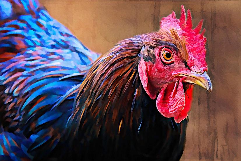 """""""Australorp Chicken"""" Fine Art Print - 12"""" x 16"""""""