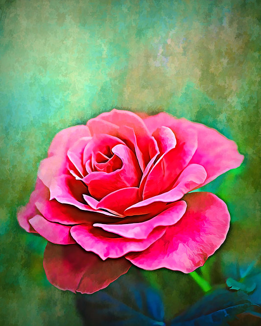 """Exquisite Pink Rose"" Fine Art Print"
